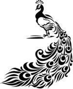 Peacock Vector Free Vector